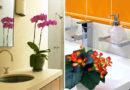 Ezeken a növényeken nem fog ki a pára: nyugodtan berakhatod őket a fürdőszobába