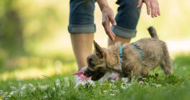Kiderült: ennyit fizetsz évente, ha kutyát tartasz