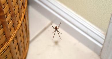 Képeken 9 módszer a pókok ellen: villámgyorsan elhagyják a lakást