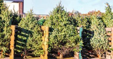 Horror, milyen drágák lehetnek idén a karácsonyfák: így tudsz mégis spórolni!