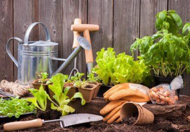 8 meglepő hely, ahol konyha- vagy fűszerkerted lehet