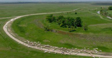 Brutális túljelentkezés volt a hortobágyi legelőkre: több ezer hektárt adnak bérbe