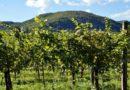 Pénzeső hullott a borászatokra – érdekes helyekre is jutott